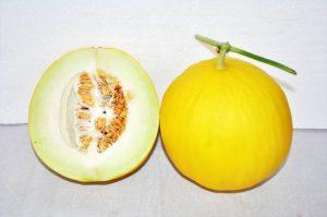 kontes-melon-2016-5