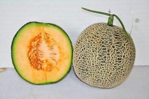 kontes-melon-2016-6