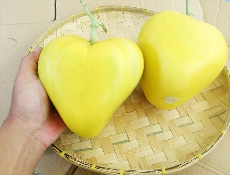 melon-cinta