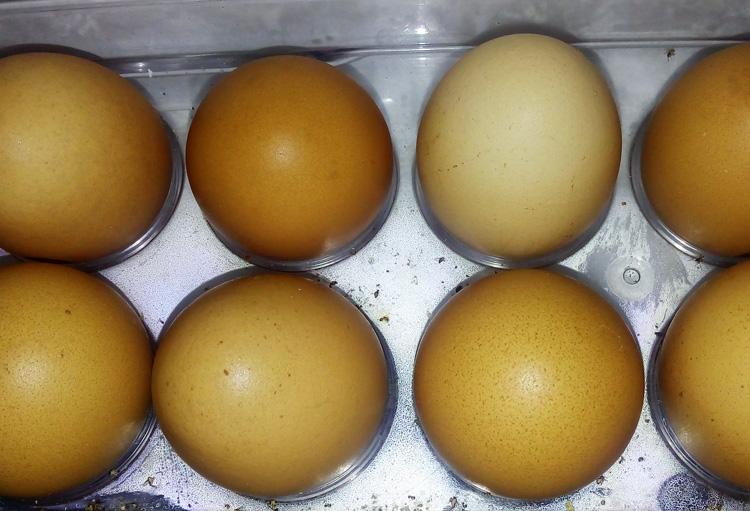 kerabang-telur