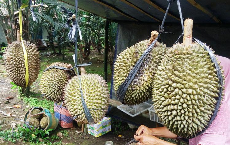 mengatasi-mabuk-durian