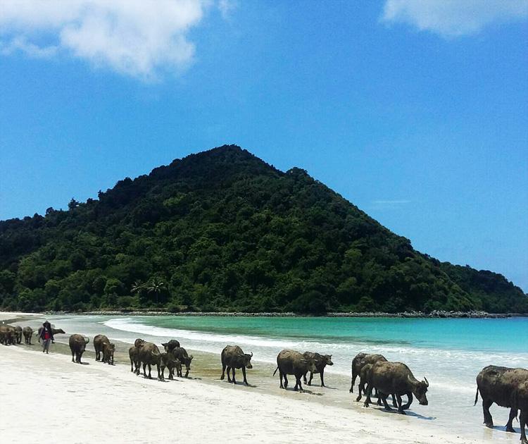 aje-gile-pantai-selong-belanak-lombok