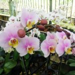 Wisata Taman Anggrek Ragunan