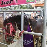 Bebeja PENAS XV KTNA 2017 (4): Pacuan Kuda Gayo