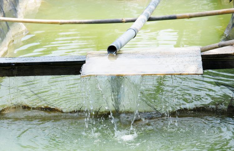 cara-meningkatkan-kadar-oksigen-terlarut-di-kolam